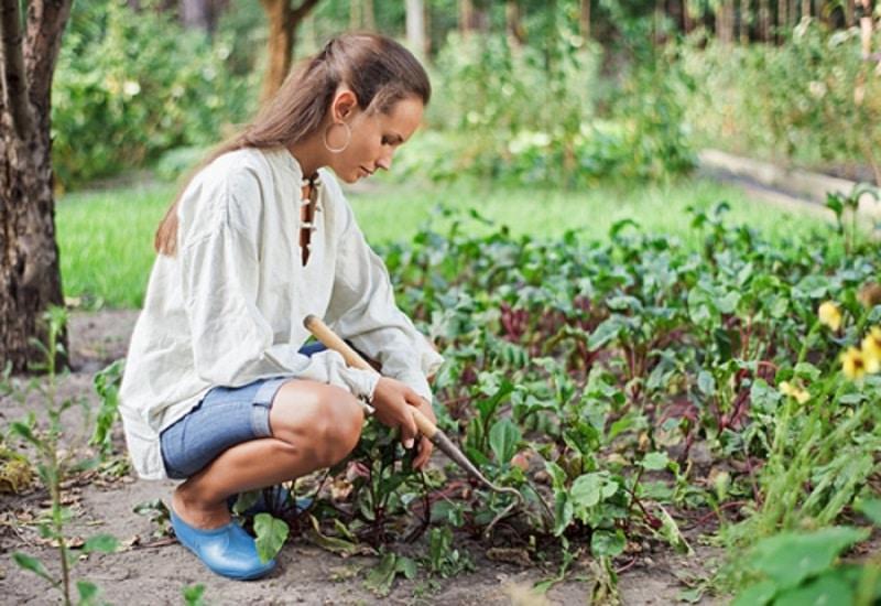 Que planter en automne quelles plantes choisir