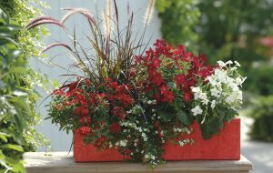 Comment faire pour bien entretenir ses jardinières en été ?